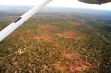 Image caption: Forest dieback caused by an extreme drought and multiple heatwaves in 2010 and early 2011 in the Northern Jarrah Forest region in southwest Western Australia.